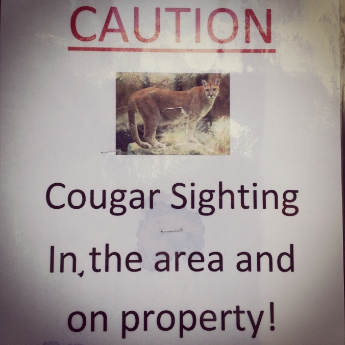 Caution - Cougars!