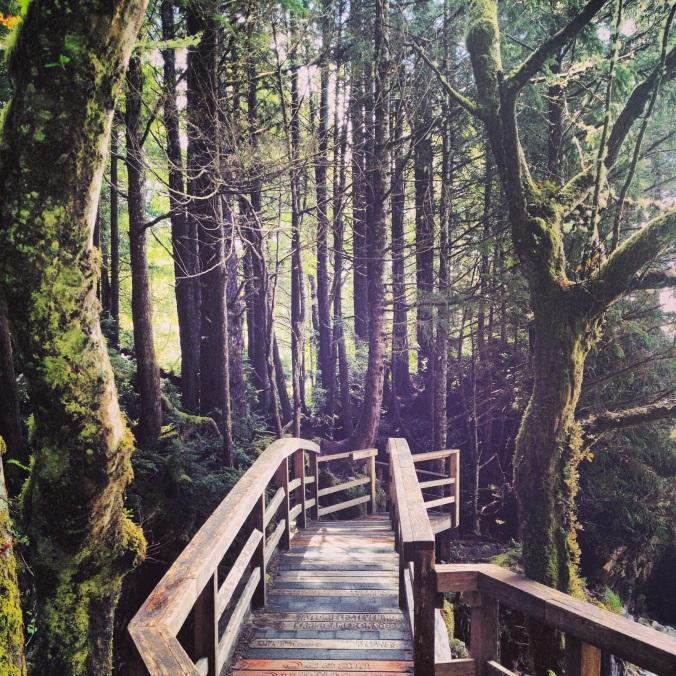 Tonquin Park Trail