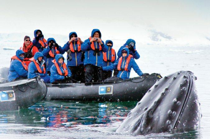 zodiac whale