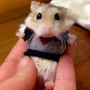 hamster-sweater